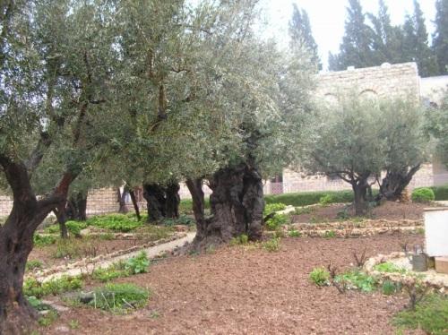 Giardino dei Getsemani